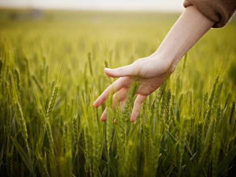 Consigli per fare impresa nel settore agricoltura